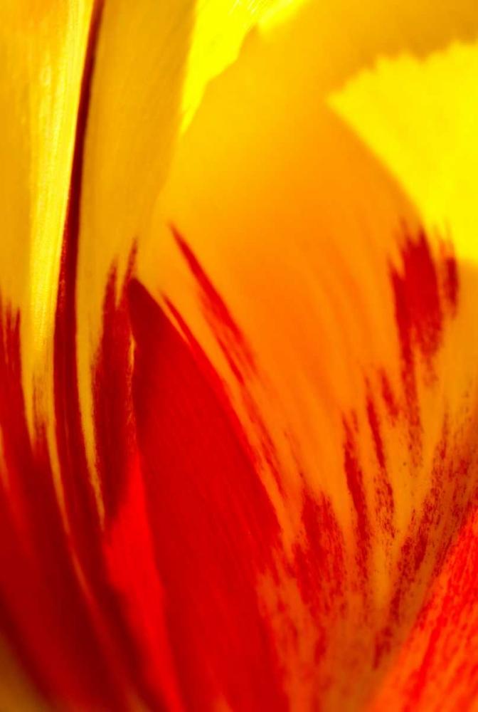 Tulip Abstract II Arduini, JoAnn 29821
