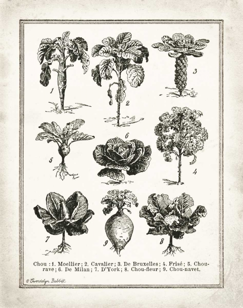 French Cabbage Babbitt, Gwendolyn 143465