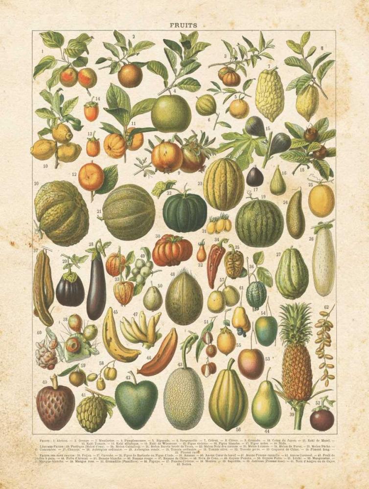 French Fruit Chart Babbitt, Gwendolyn 164184