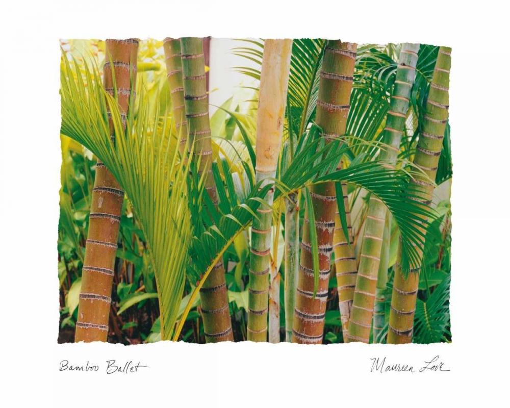 Bamboo Ballet Love, Maureen 5914