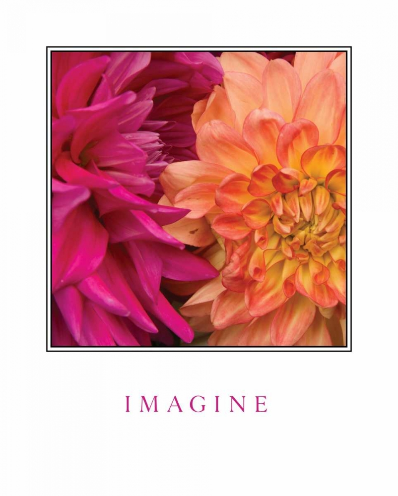 Imagine Flowers Love, Maureen 14047