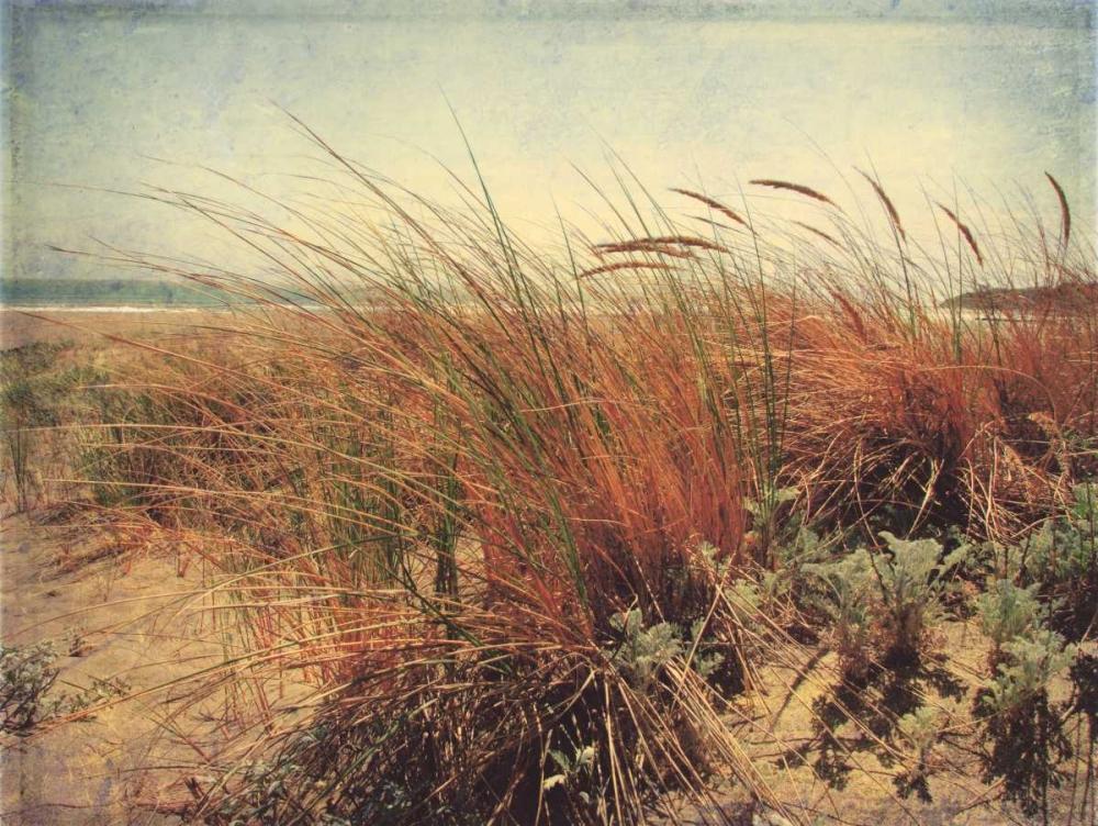 Sand Dunes II Melious, Amy 6023