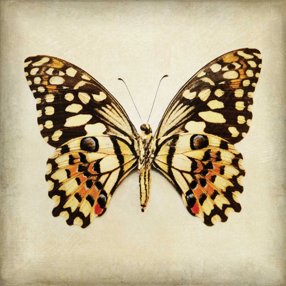 Butterfly 6 Melious, Amy 14055