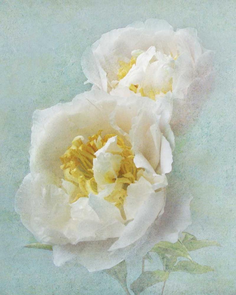 Aqua Floral III Melious, Amy 14060