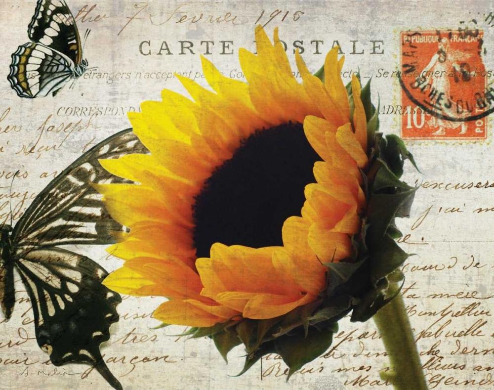 Carte Postale Sunflower Melious, Amy 14089