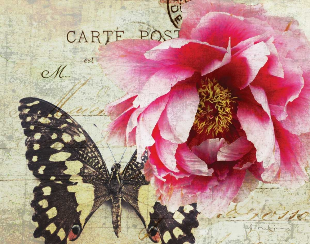 Carte Postale Peony Melious, Amy 14091