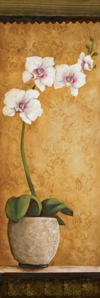 Hannas Orchids I Osborne, Susan 6226