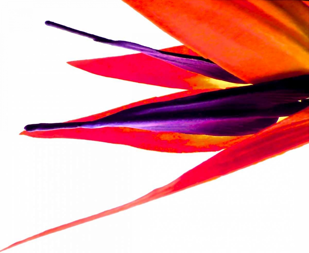 Bird of Paradise V Burkhart, Monika 63769