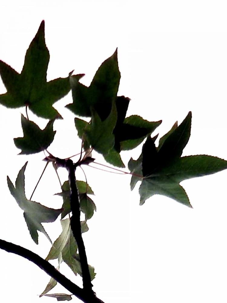 Maple Branch III Burkhart, Monika 63820