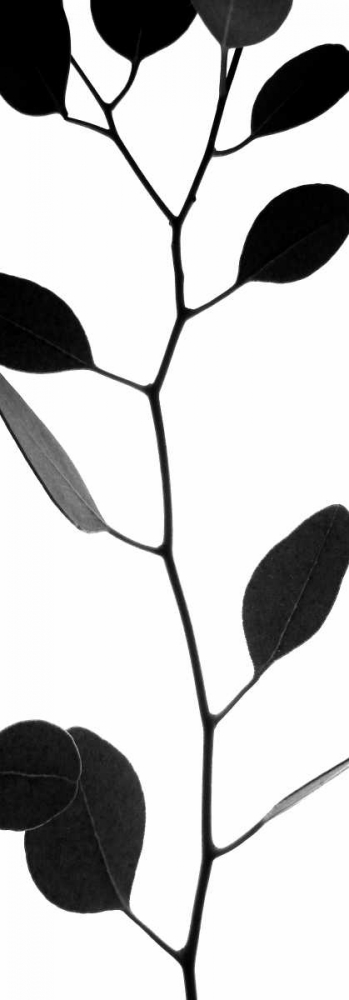 Lunaria Honesty I Burkhart, Monika 63824