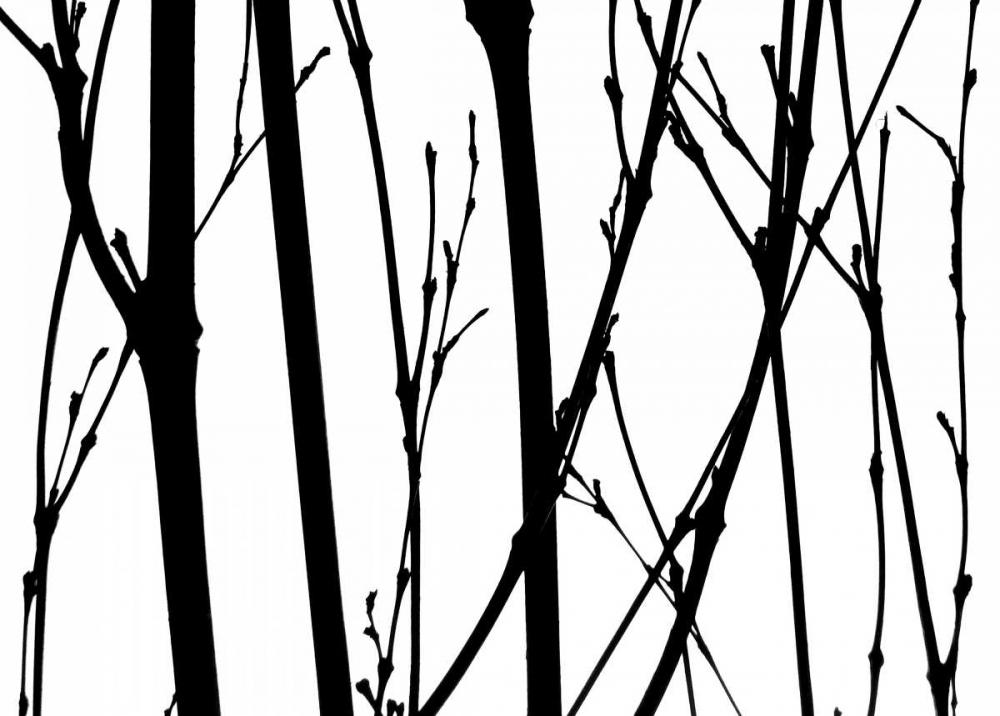 Branch Silhouette V Burkhart, Monika 63840
