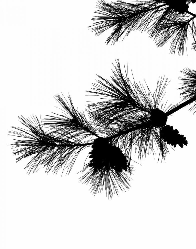 Pine Soliloquy I Burkhart, Monika 163975