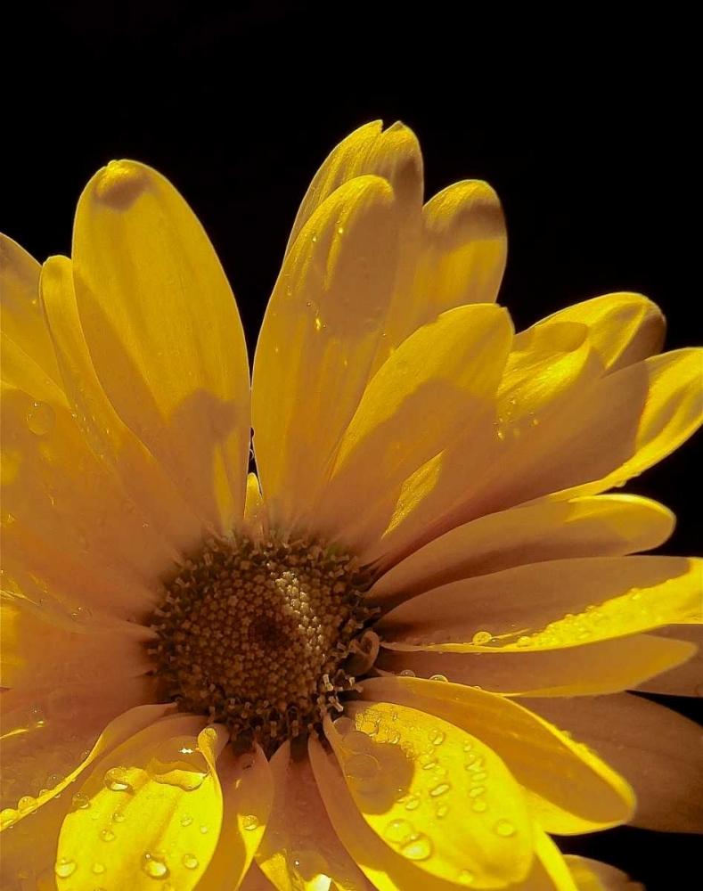 Sun Sparkled III Burkhart, Monika 163947