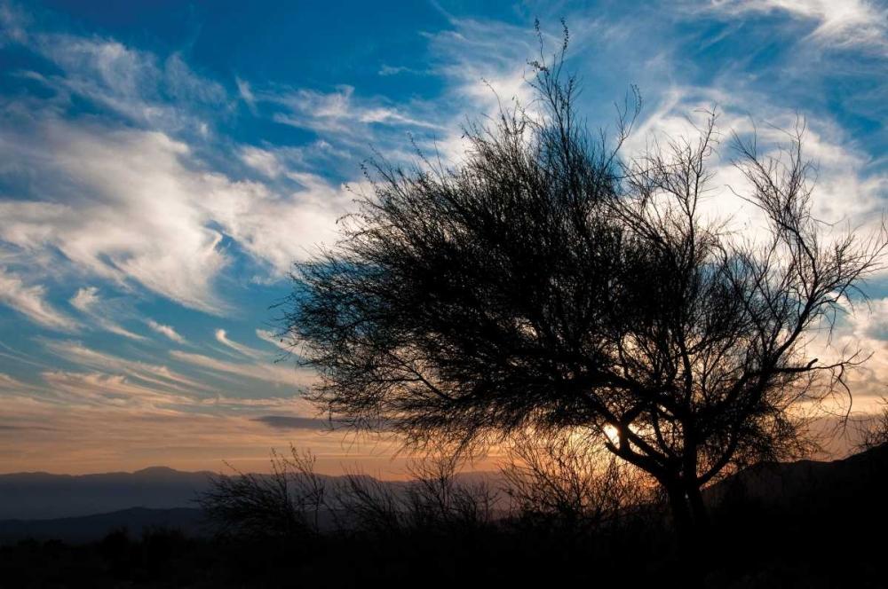 Sunset in Joshua Tree I Berzel, Erin 213