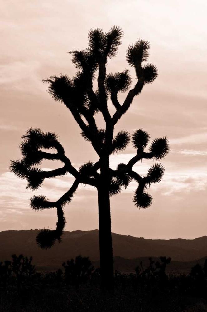 Yucca Brevifolia II Berzel, Erin 221