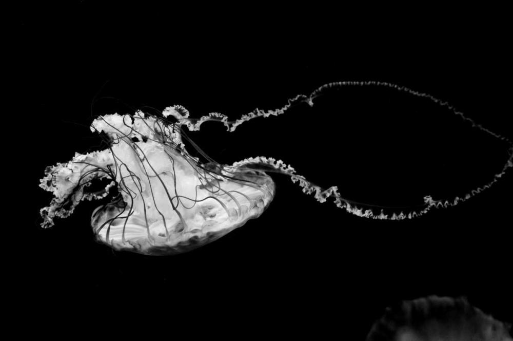 Jellyfish Glow V Berzel, Erin 1102