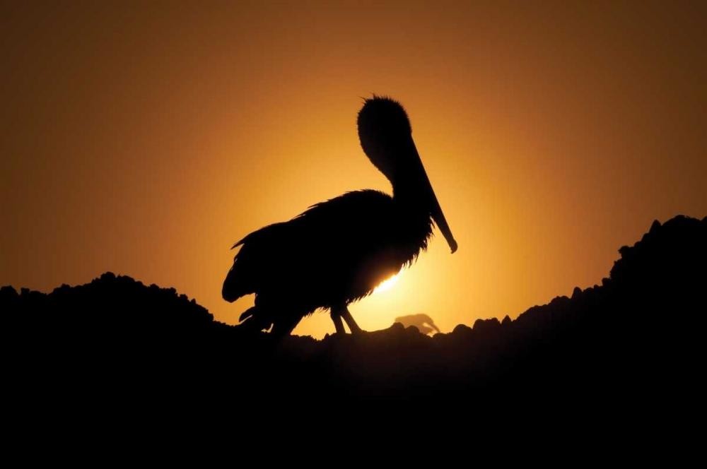 Pelican Silhouette I Berzel, Erin 1108