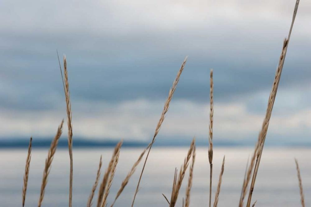 Whidbey Grass I Berzel, Erin 1444