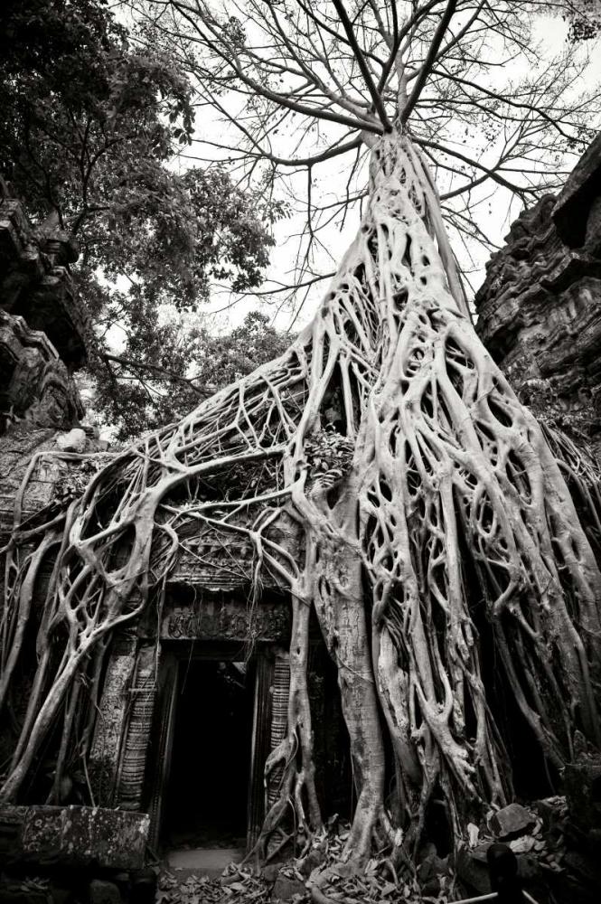Doorway and Roots I Berzel, Erin 14213
