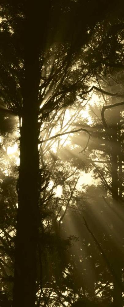 Sepia Shadows I Berzel, Erin 24558