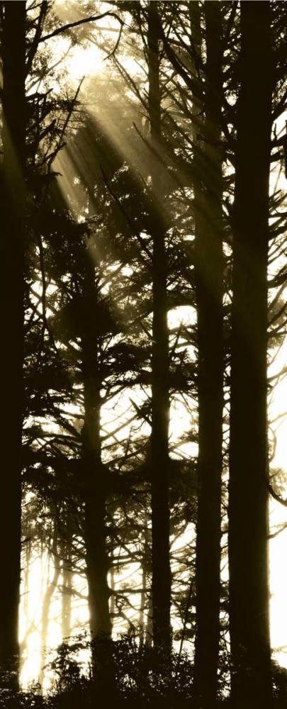 Sepia Shadows II Berzel, Erin 24559