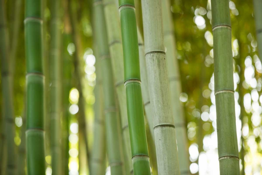Bamboo and Bokeh I Berzel, Erin 29112