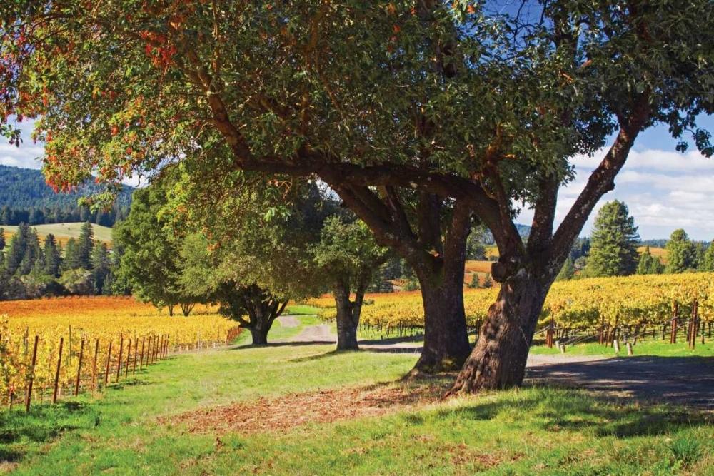 Oak and Vine II Crane, Rita 1523
