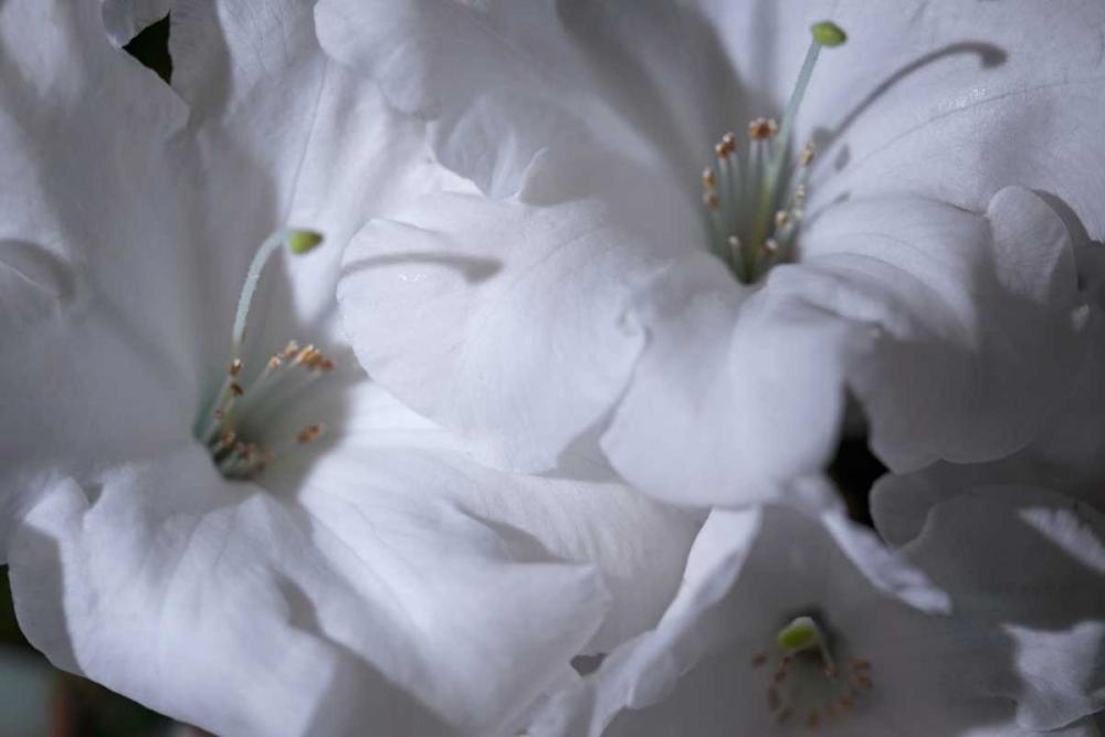 Delicate Blossoms II Crane, Rita 29302