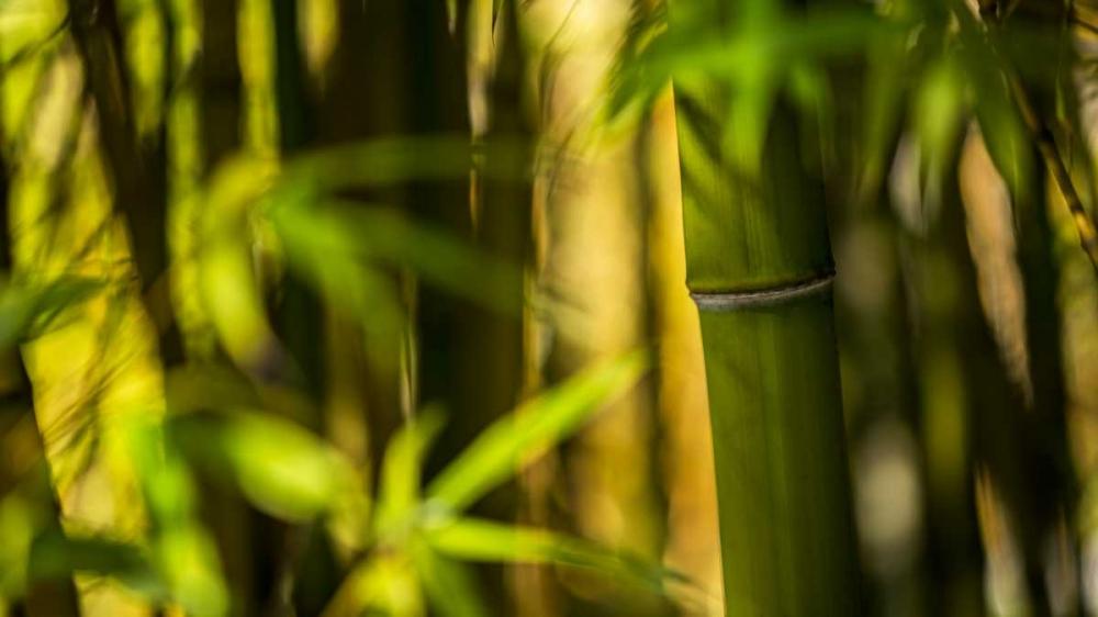 Bamboo Afternoon II Crane, Rita 63985