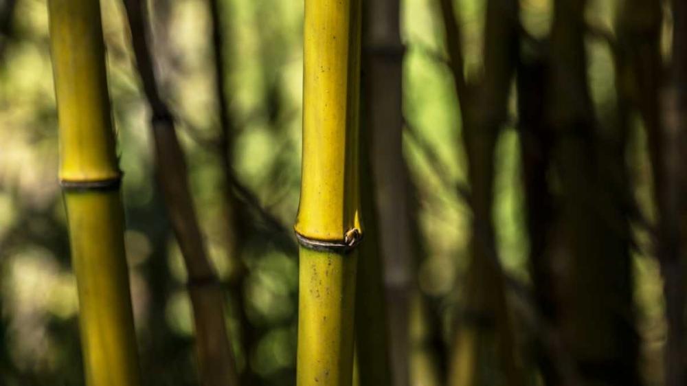 Bamboo Afternoon III Crane, Rita 63986
