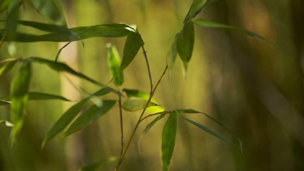 Bamboo Afternoon XI Crane, Rita 63994
