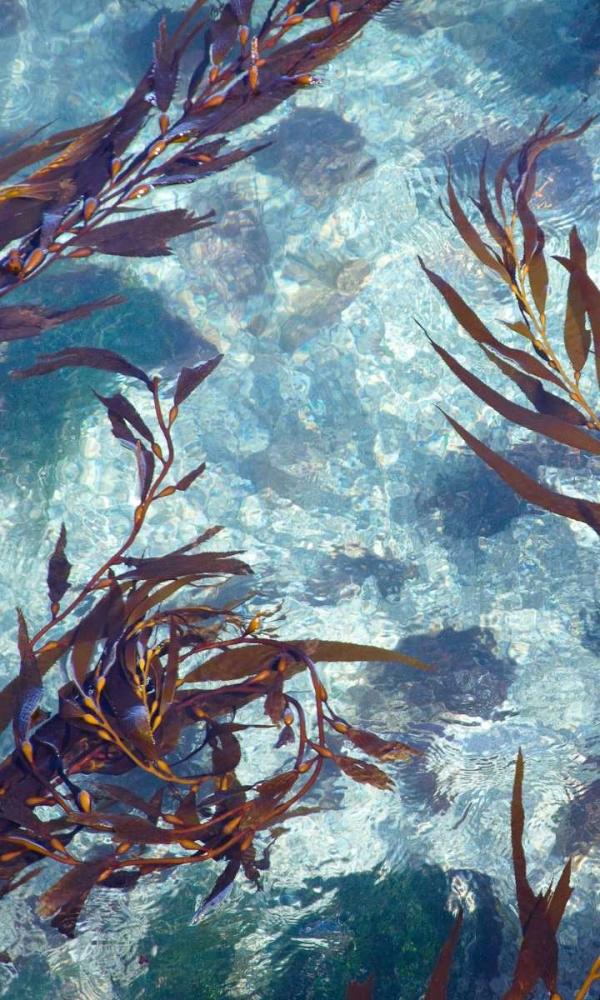 Mermaid Tresses IV Crane, Rita 145280