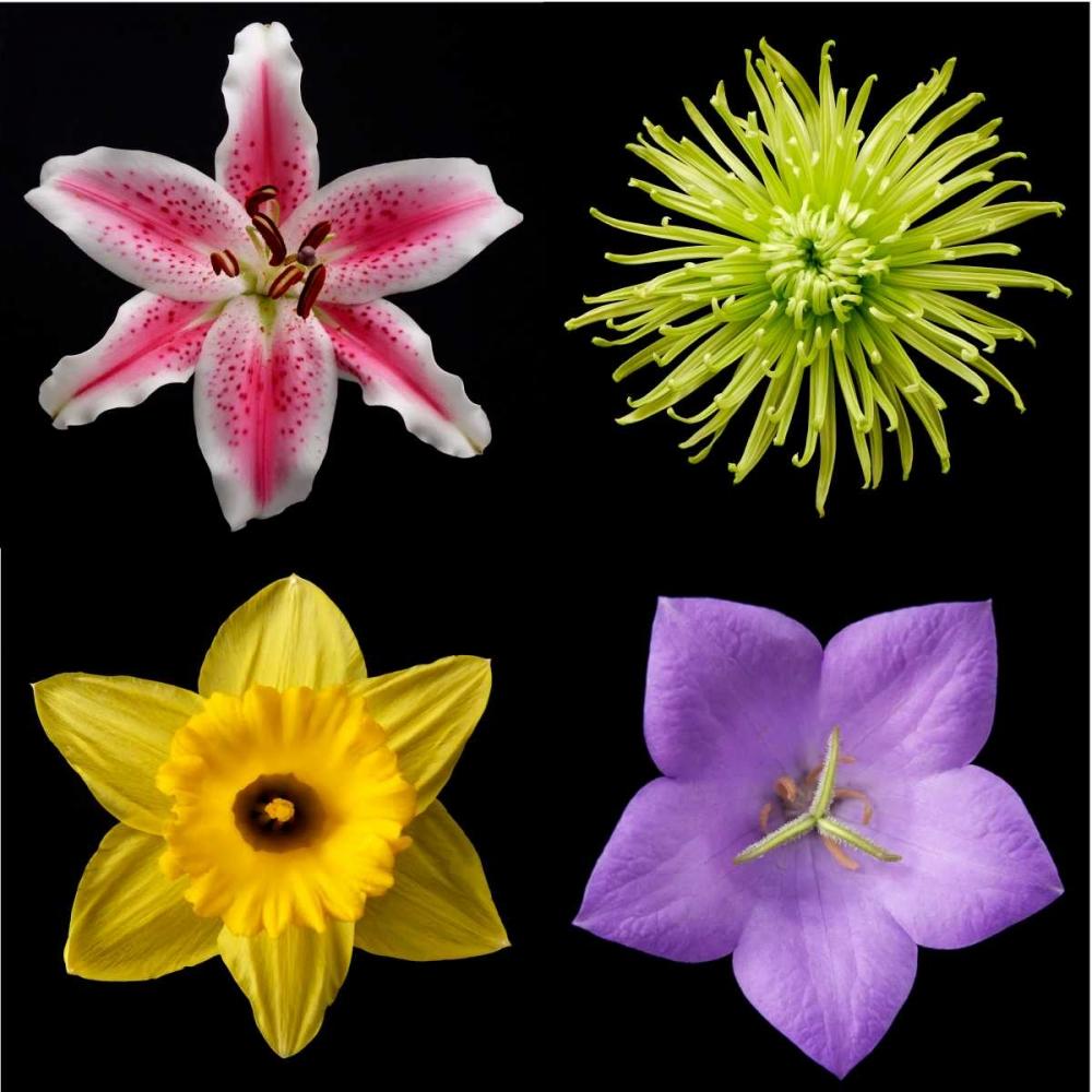 Flower Group 1 Christensen, Jim 82894