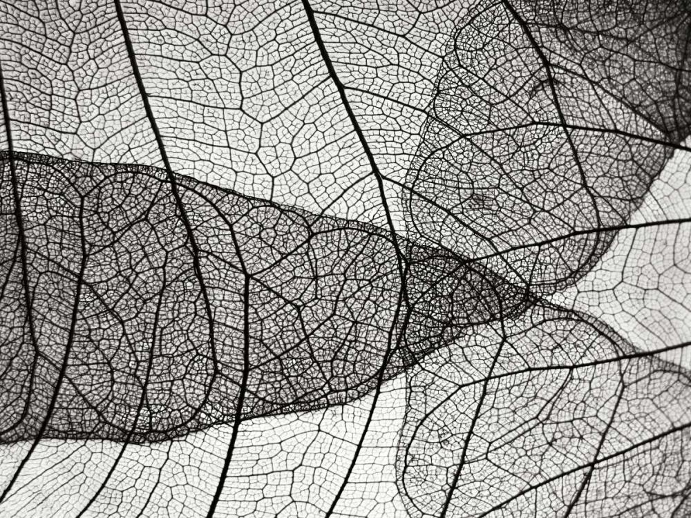 Leaf Designs II BW Christensen, Jim 82909