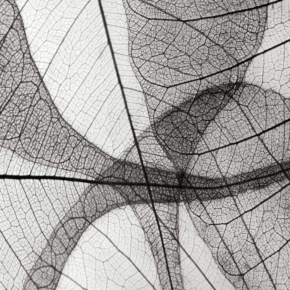 Leaf Designs III BW Christensen, Jim 82954