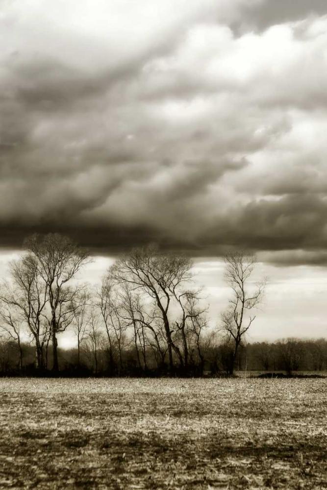Winter Fields VI Hausenflock, Alan 9556