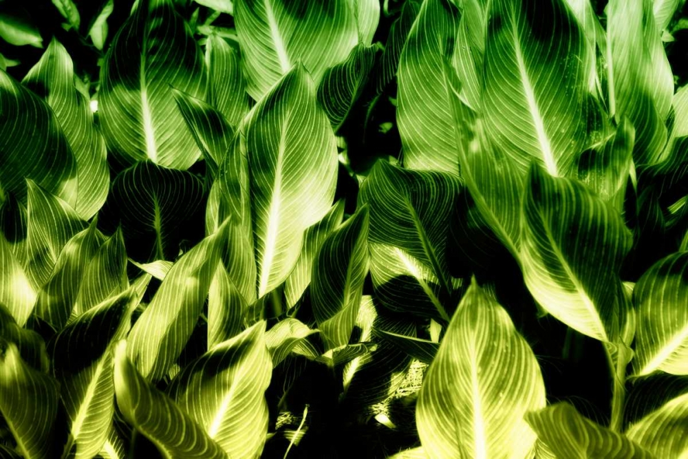 Tropical Foliage I Hausenflock, Alan 9649