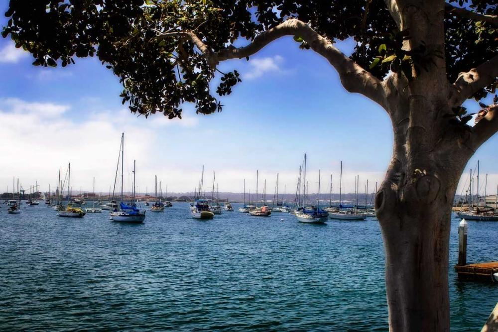 San Diego Que IV Hausenflock, Alan 24772