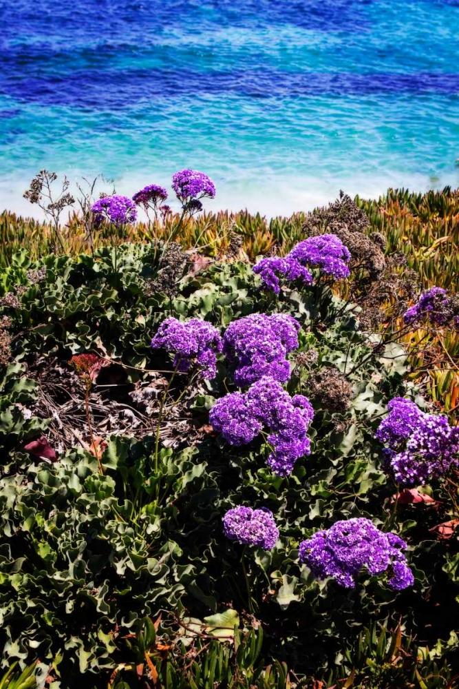 La Jolla Beach I Hausenflock, Alan 24783