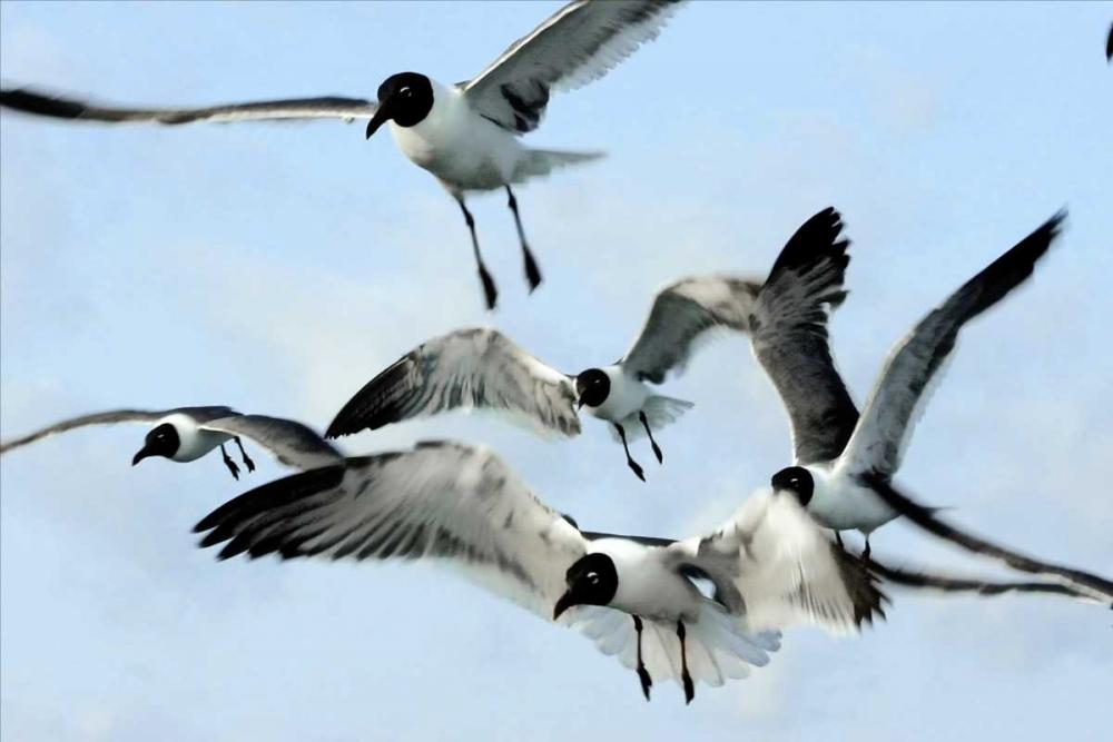 Gulls I Hausenflock, Alan 839