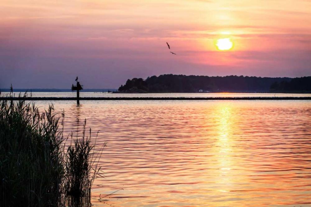 Ospreys at Sunset Hausenflock, Alan 145355