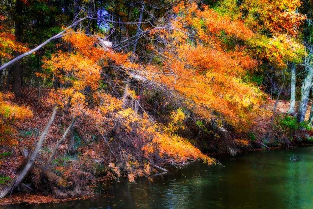 Color Of Fall III Hausenflock, Alan 145472