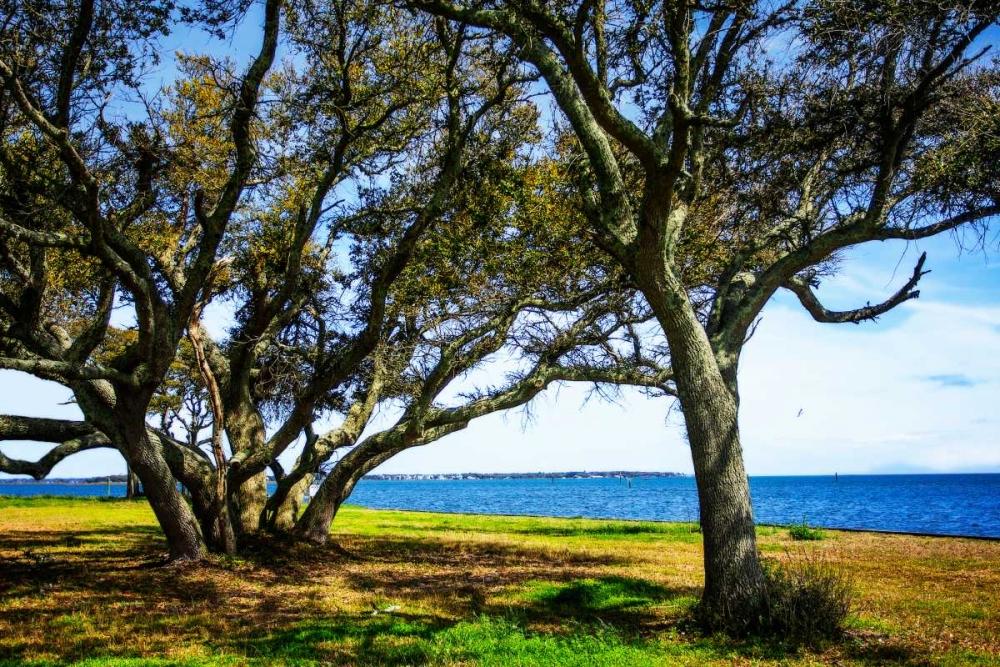 Live Oaks By The Bay I Hausenflock, Alan 145484