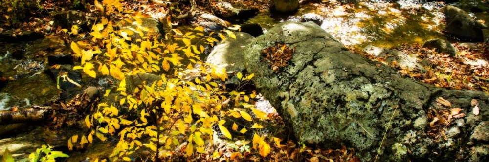Forest Floor II Hausenflock, Alan 145525