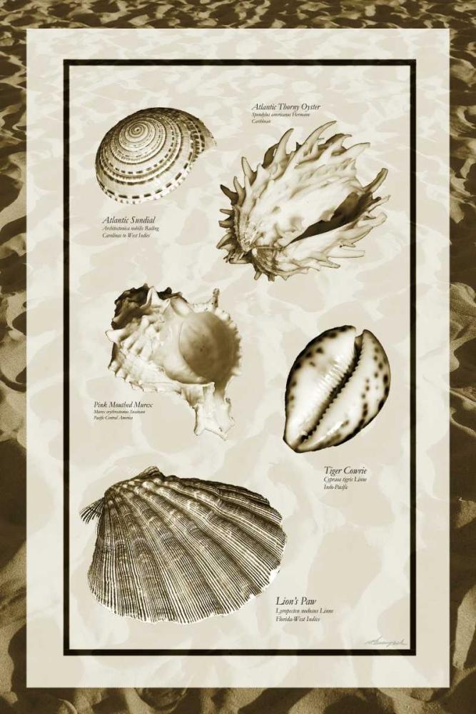 Sand and Shells II Hausenflock, Alan 145571