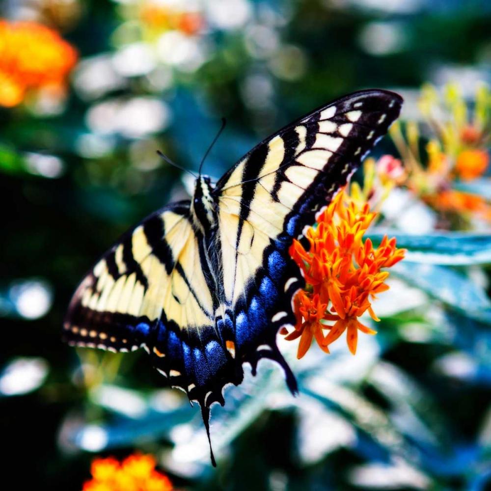 Resting Butterfly II Hausenflock, Alan 145686