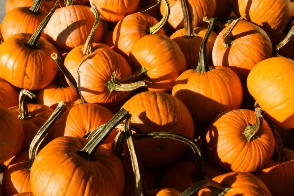Pumpkins Hausenflock, Alan 1690