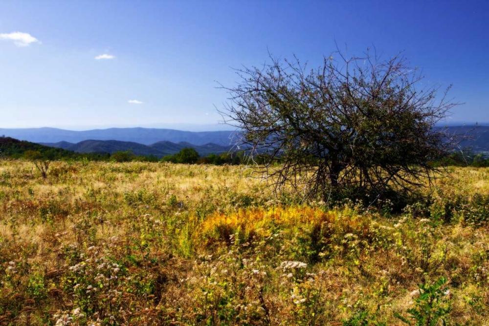 Distant Mountains III Hausenflock, Alan 938