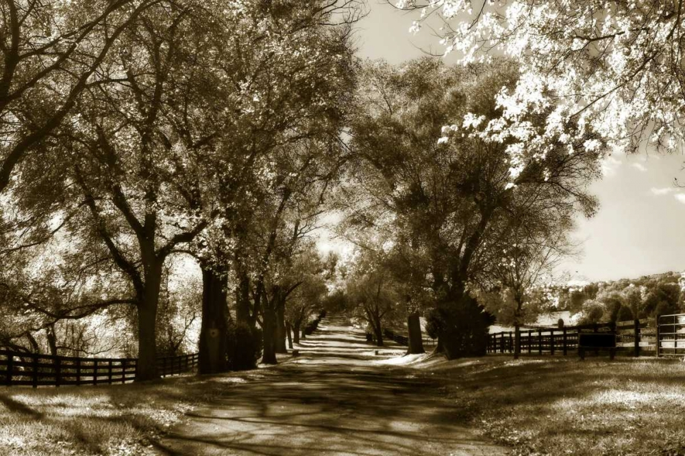 Autumn Foothills VI Hausenflock, Alan 1186