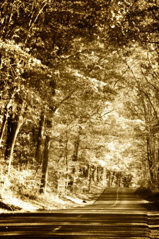 Autumn Wood Road III Hausenflock, Alan 1191